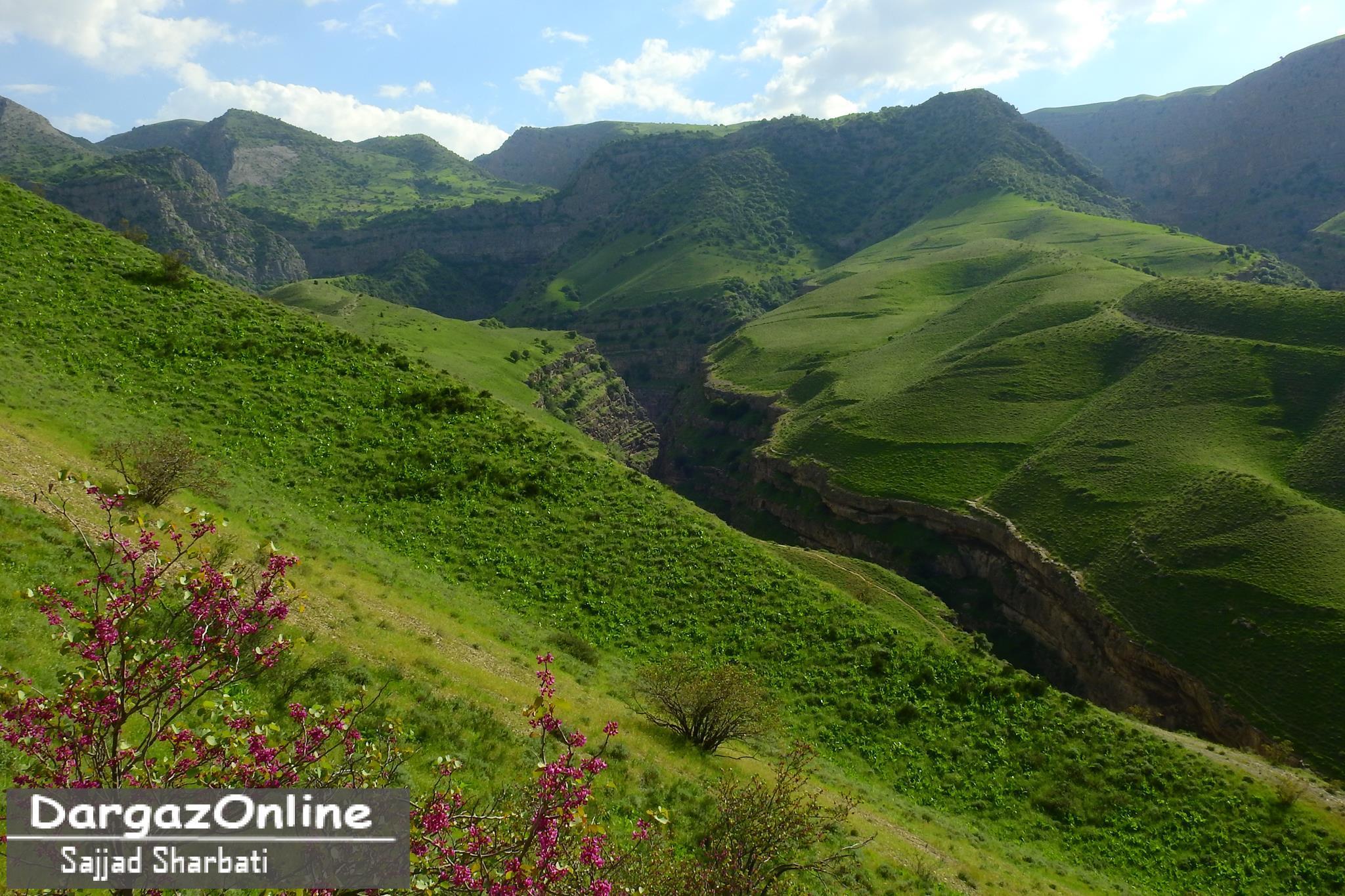 دره ارغوان درگز هر ساله در اردیبهشت ماه با شکفتن غنچه های ارغوان در اوج زیبایی است
