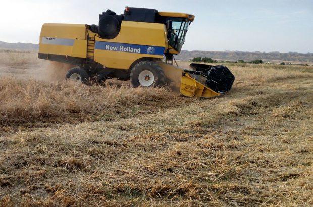 رشد ۳ برابری برداشت محصولات زراعی در درگز