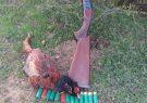 دستگیری متخلفین شکار غیر مجاز قرقاول به همراه یک قبضه سلاح شکاری در درگز