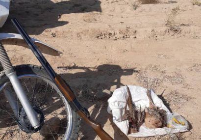 شکارچی پرندگان وحشی در درگز دستگیر شد