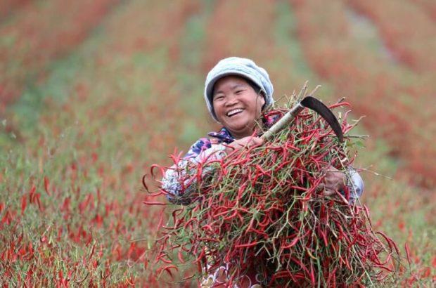 تمامی جمعیت فقیر چین از فقر رهایی یافته اند